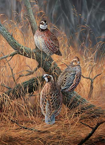 Quail hunting paintings - photo#24